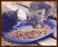 stgeorgeislandfloridacats1
